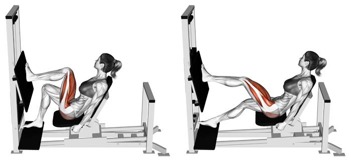 Single-Leg Press