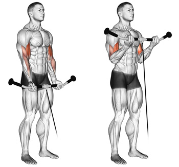 cable bicep curls